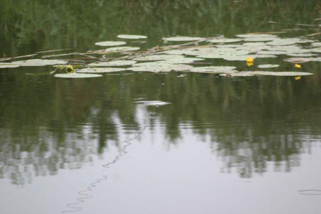 Veel wateren groeien langzamerhand dicht
