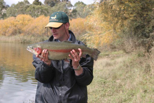 Mijn record regenboogforel, ruim 70 cm