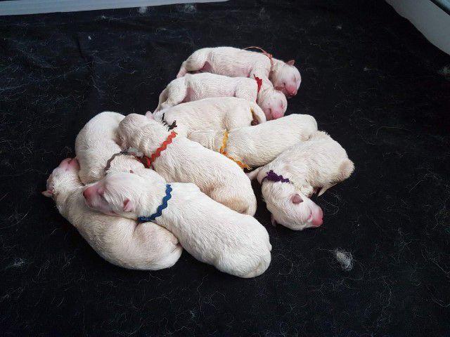 De pups zijn hier nog maar net geboren