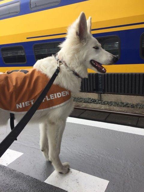 Op het perron bij de trein